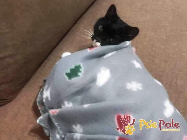 BĄBELEK-kochany maleńki kociak-szukamy troskliwego domu, ADOP