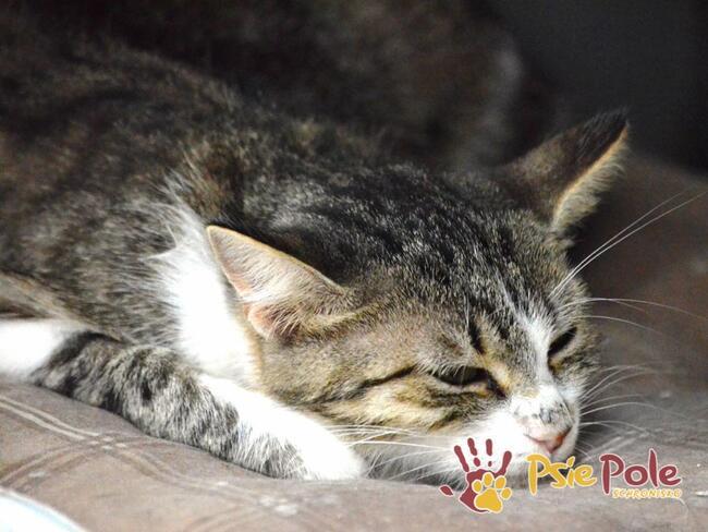CZKAWECZKA-Malutka buro-biała mama-koteczka szuka domu, adop
