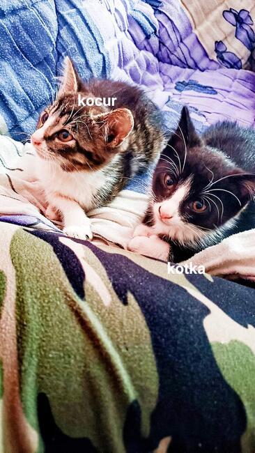Oddam kocurka i kotkę
