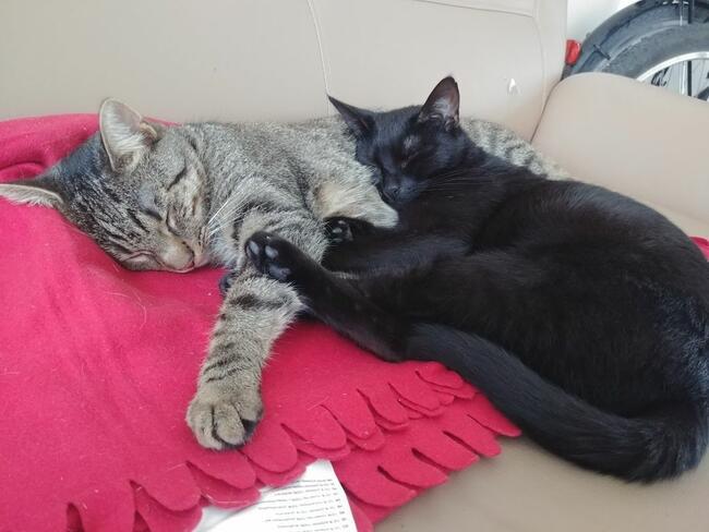 Oddam kotki w dobre i kochające rączki