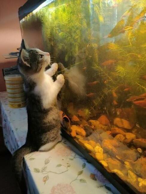 4 kociczki szukają nowych właścicieli