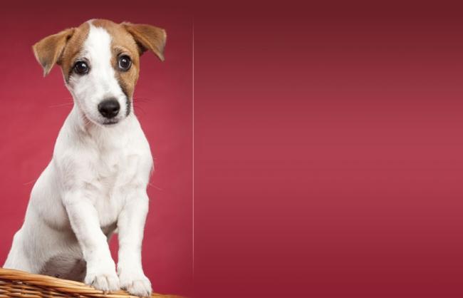Salon piękności dla psów i kotów, psi fryzjer,strzyżenie
