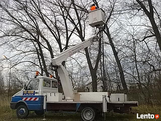 Wycinka i pielęgnacja drzew W Lublinie-tanio