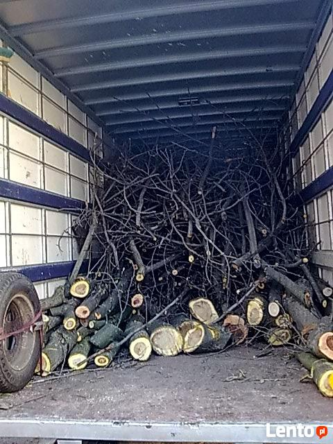 Pielęgnacja drzew, prześwietlanie koron, usuwanie posuszu