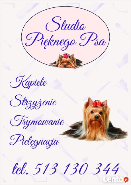 Psi fryzjer ,strzyżenie i pielęgnacja psów, trymowanie psów