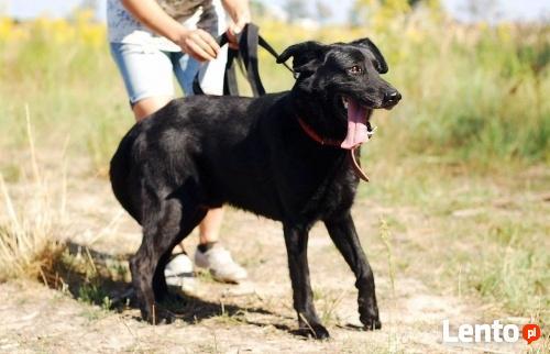 FRUGO - będzie wiernym przyjacielem całej rodziny - adopcja