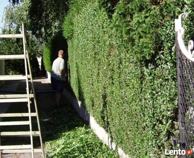 Pomyśl o swoim ogrodzie już teraz!