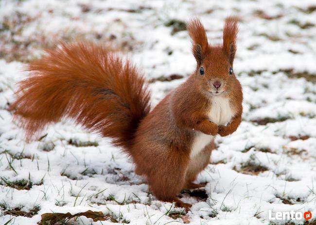 Snow challenge. Zimowa sesja zdjęciowa.