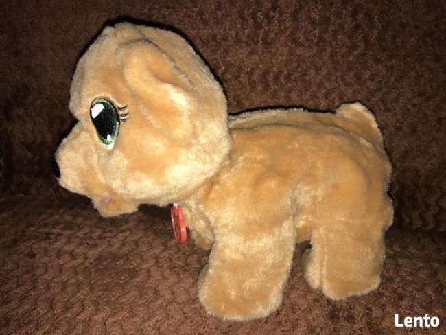 Zabawka niedźwiadek chodzi i śpiewa
