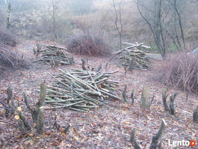 Usuwanie wiatrołomów, wycinka drzew, czyszczenie działek