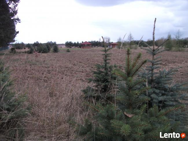 Działka budowlana Dąbrówka Kościelna, przy lesie, media