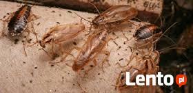 Dezynsekcja pluskiew,prusaków, karaluchów,zwalczanie pluskwy
