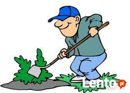 Wycinka drzew, usuwanie korzeni, usuwanie gałezi,pielęgnacja