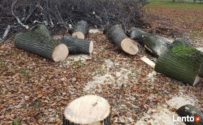 Wycinka drzew za drzewem w rozliczeniu - Rydułtowy