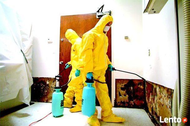 Mykotoksyny grozne dla zdrowia czyli grzyb i pleśń w domu