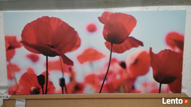 Obraz Ikea - Pole Maków 120x56 39 zł