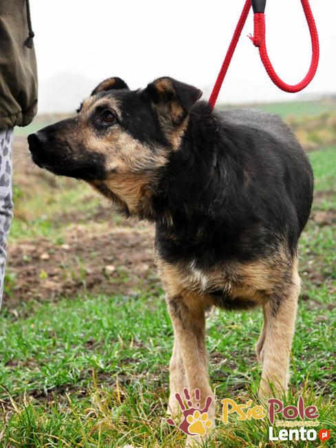 Pies szlachetny jak jego imię smutny SZMARAGD czeka na dom