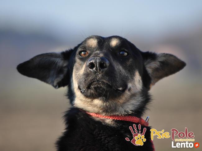 MILKY-młody psiak po przejściach-szukamy spokojnego opiekuna