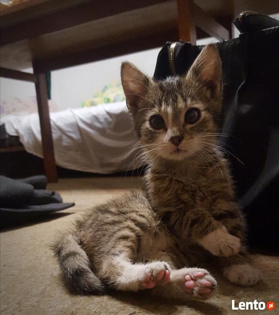 Znaleziono kociaka , przystanek w Braciejówce
