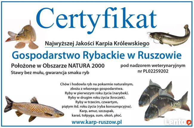 Karp Sprzedaż - Wrocław - patroszenie w cenie!