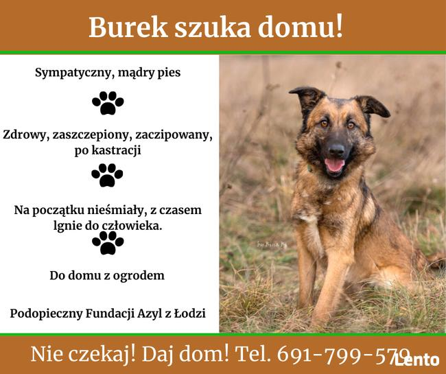 Burek szuka domu