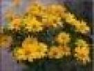 sadzonki kwiatów wieloletnich na skalniak, rabatę, nad oczko Lanckorona