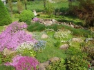 sadzonki kwiatów wieloletnich - mrozoodpornych Lanckorona