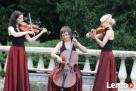 skrzypce - profesjonalna oprawa muzyczna - 1