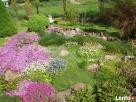 kwiaty do ogrodu - sadzonki w doniczkach Lanckorona