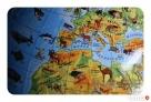 Globus 220 Zoologiczny + książeczka ze zwierzętami(+karton) - 4