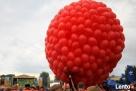 BALONY na wesele slub biale perlowe kolorowe bal impreza wow Wrocław