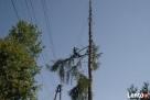 Wycinka Drzew, Pielęgnacja Drzew, Usuwanie Gałęzi - 6