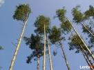 .-Wycinka drzew, MYSZKÓW. usługi zwyżką, TEL-660-167-266. Myszków