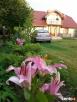 Agroturystyka-pokoje gościnne Rajgród