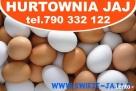 Jaja-Hurt Jaj-Leszno,Śmigiel,Kościan,Stęszew,Luboń,Poznań Poznań