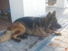 Hotel domowy FIGA dla psów i innych zwierzat... Żywiec