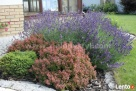 Projektowanie ogrodów, zakładanie ogrodów, tarasy drewniane Izabelin