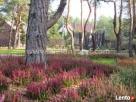 Projektowanie ogrodów, zakładanie ogrodów, tarasy drewniane - 4