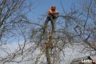 przycinanie drzew owocowych Opole