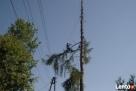 Wycinka Drzew, Pielęgnacja Drzew, Usuwanie Gałęzi, Korzeni - 2