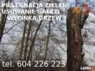 Wycinka i Pielęgnacja Drzew, Usuwanie Gałęzi, Korzeni Kraków