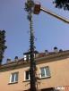 Wycinanie drzew karczowanie krzaków przycinanie koron drzew - 2