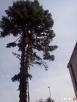 Spalinowy Rębak gałęzi, rozdrabniarka Makita, cięcie,wycinka - 4