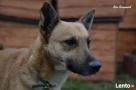 Holubek - mały psiak szuka domu i miłości Luzino