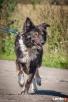 Szagi - wspaniały pies szuka domu. OTOZ Animals Dąbrówka Luzino