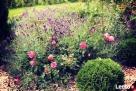 Projektowanie, pielęgnacja, aranżacja ogrodów - 4