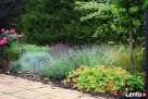 Projektowanie, pielęgnacja, aranżacja ogrodów - 3