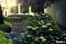 Projektowanie, pielęgnacja, aranżacja ogrodów - 6