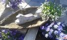 Żaba figurka do ogrodu -betonowa mrozoodporna - 5