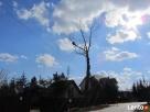Alpinistyczna Wycinka i Przycinka Drzew Rzeszów - 3